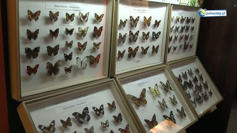 Fascynujący świat entomologii