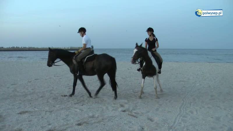 Wszystko o koniach